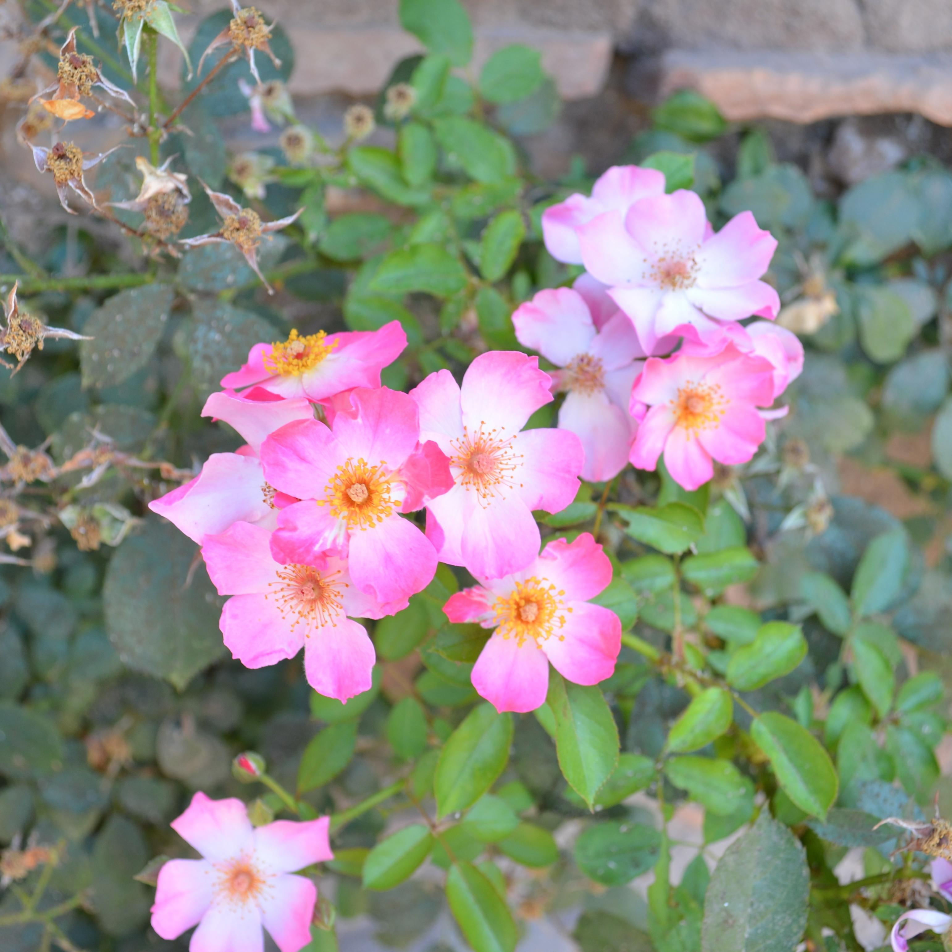 flowers - full color